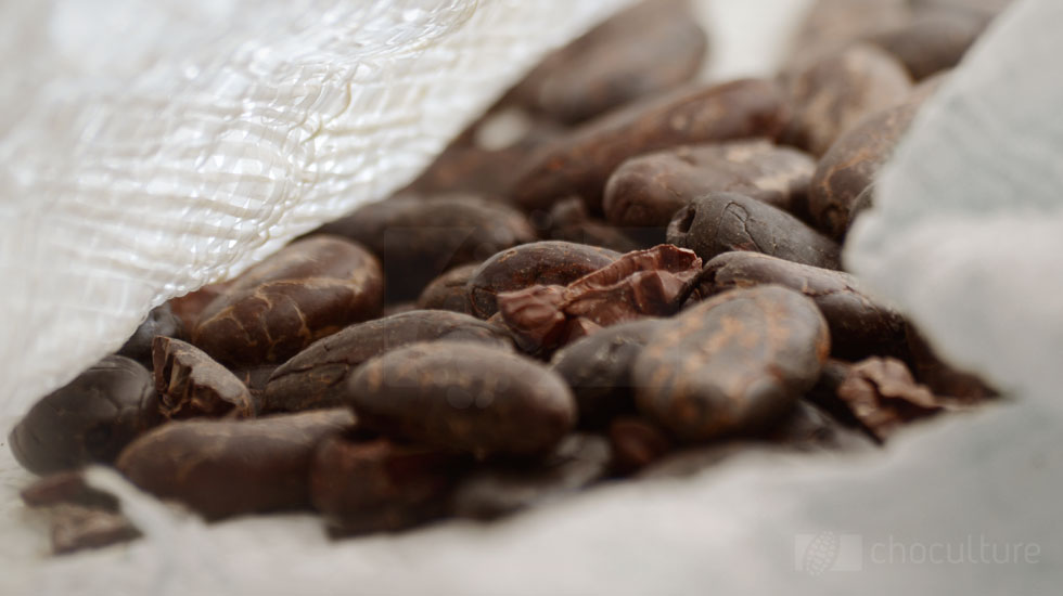 Criollo – Kakaobohnen