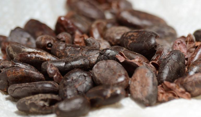 Domori – Unverarbeitete Criollobohnen