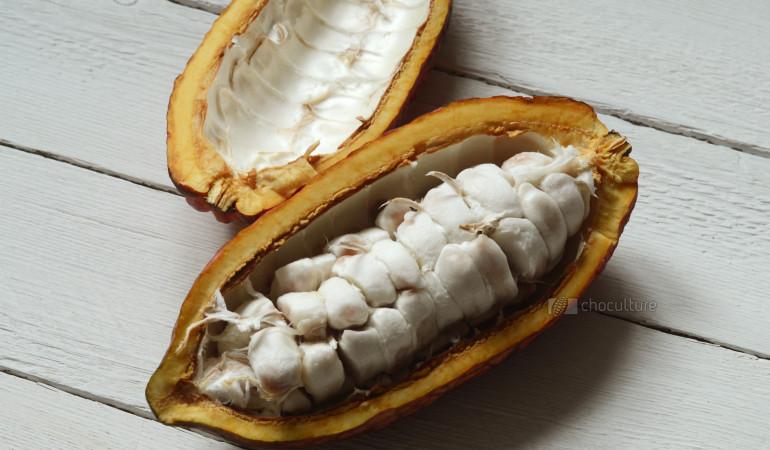 Kakaoschote mit Bohnen